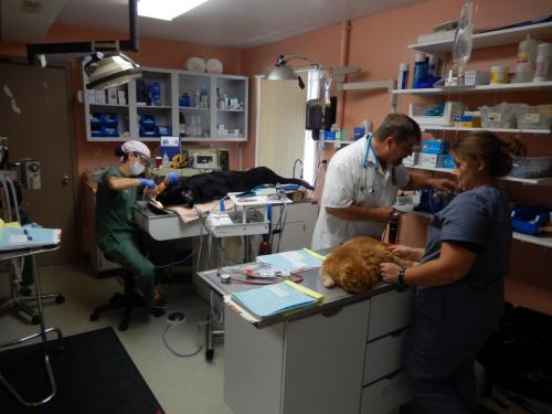 Dental-cleaning-on-a-dog-and-treating-a-diabetic-cat-at-Veterinary-Hospital-1024x768